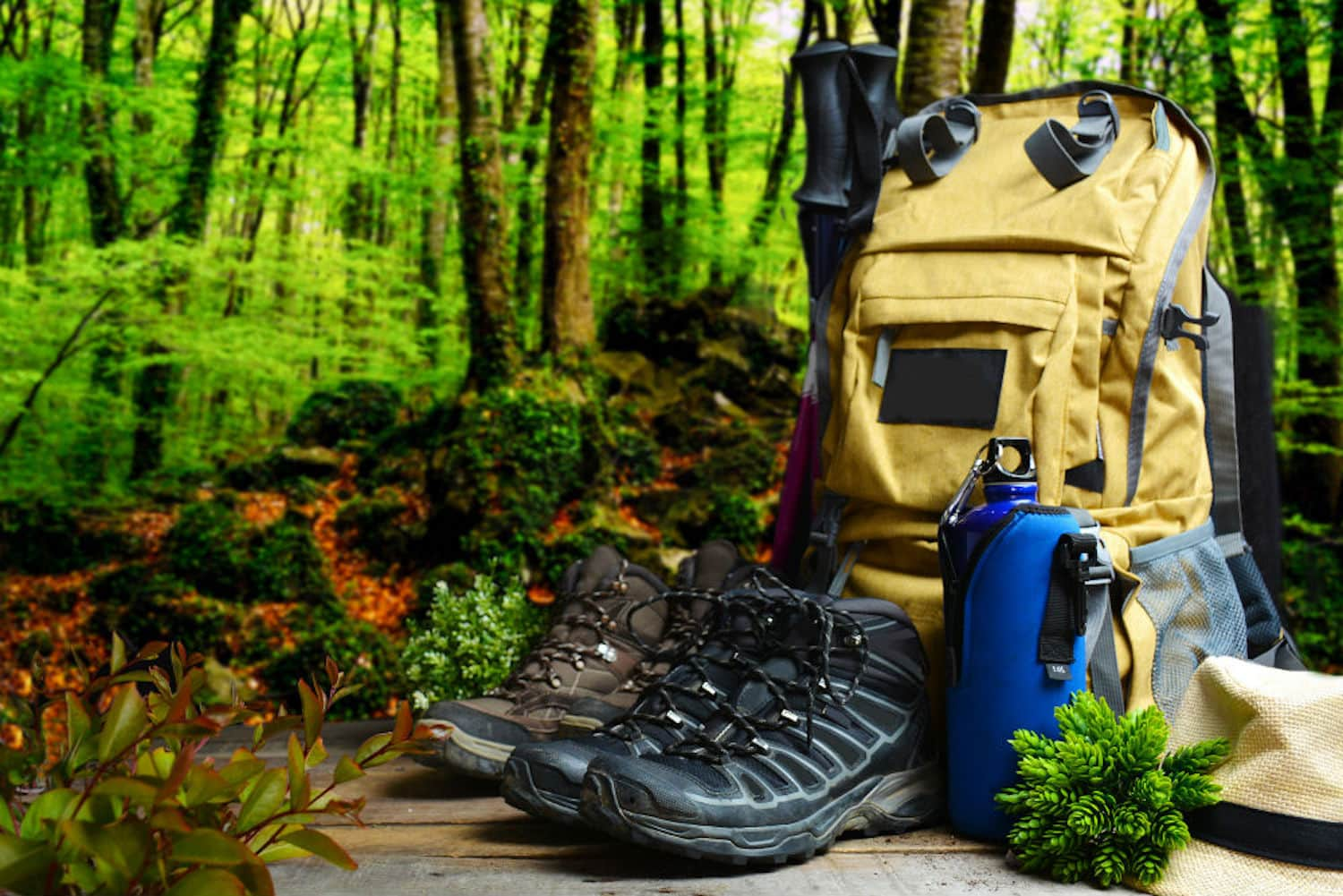 Hiking gear in the forest