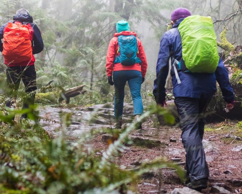 hikers are hiking in the woods